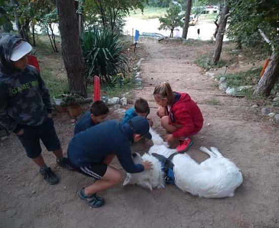 игра с куче по време на лагер